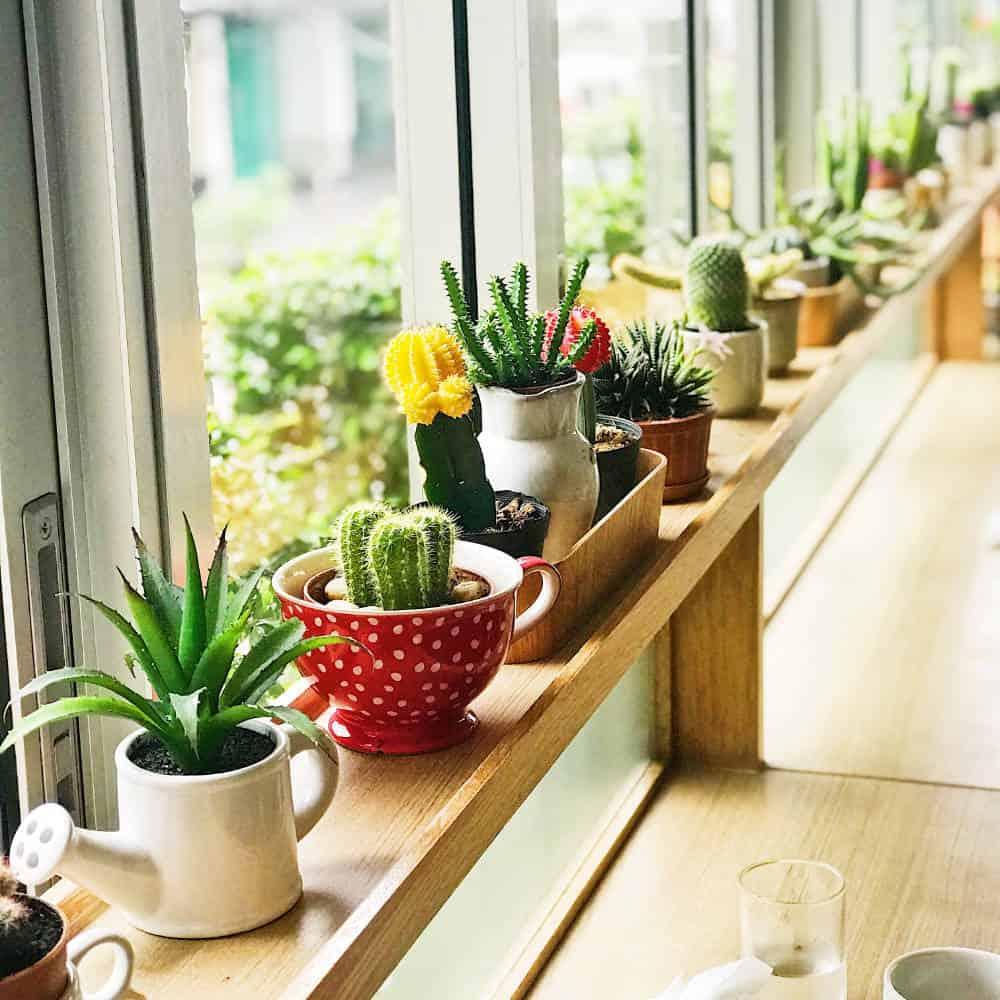 Kakteen und Succulenten beim urban gardening